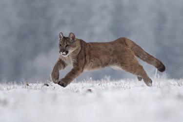 Running wild by Tygrik
