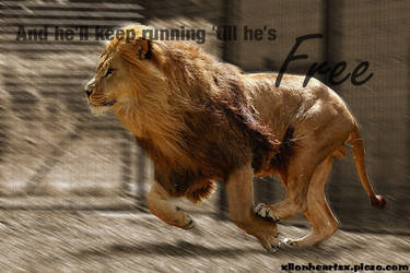 Running Lion by charl-ii-ee