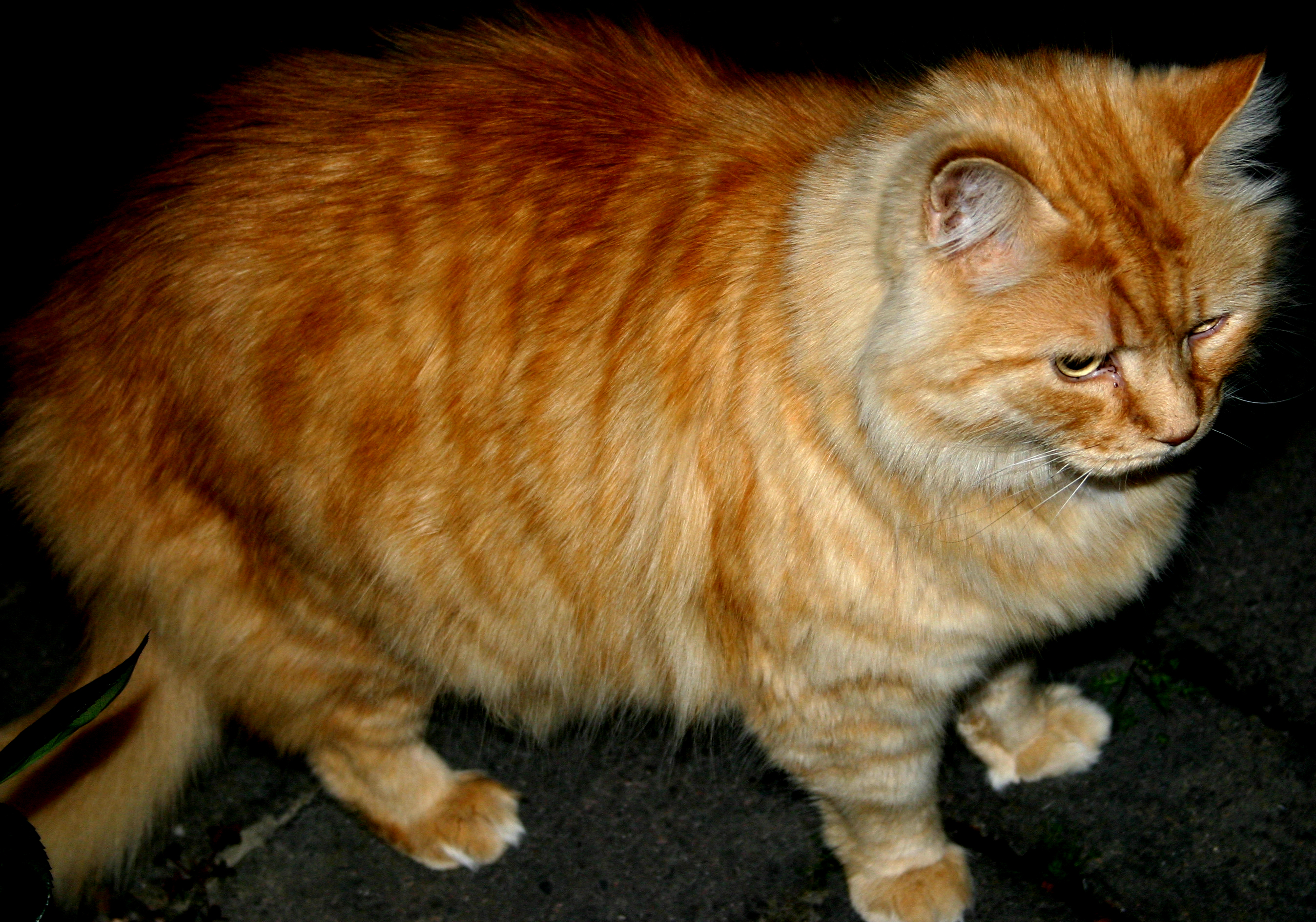 Real Life Garfield By Angelic Painter On Deviantart
