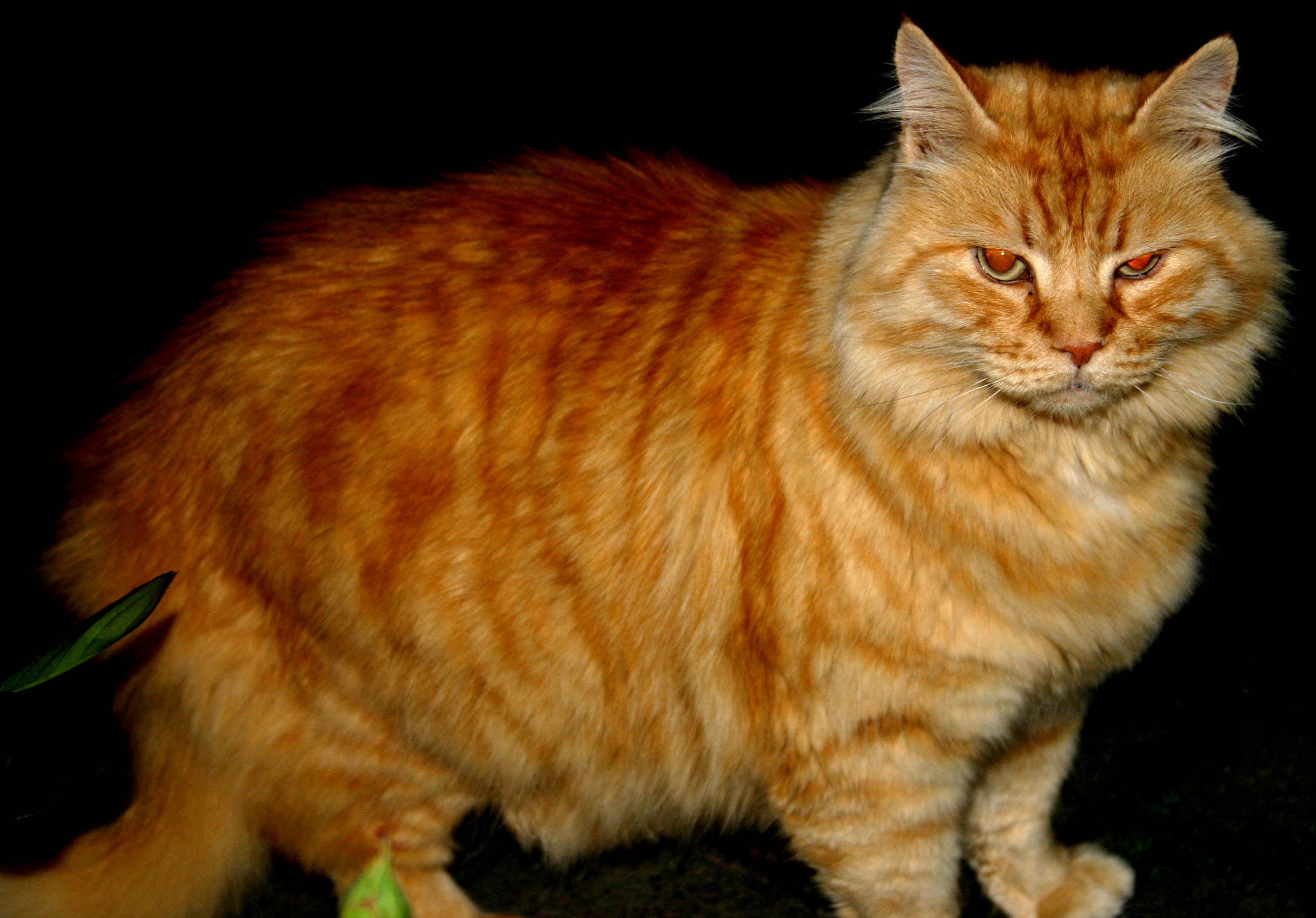 Real Life Garfield 2 By Angelic Painter On Deviantart