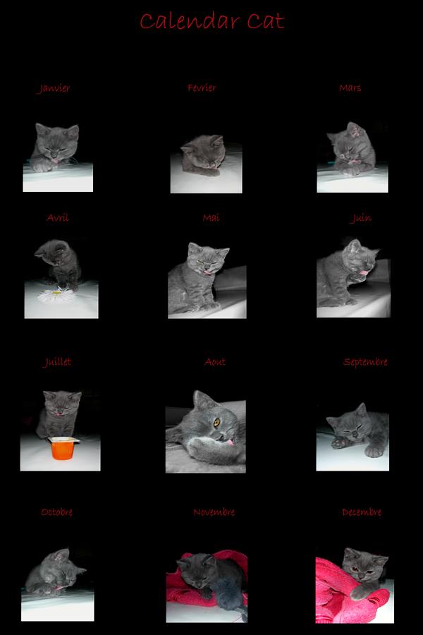.My calendar cat by Flore