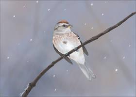 American Tree Sparrow by winternacht