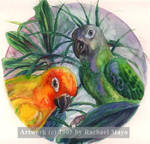 Mango and Kiwi Roundel