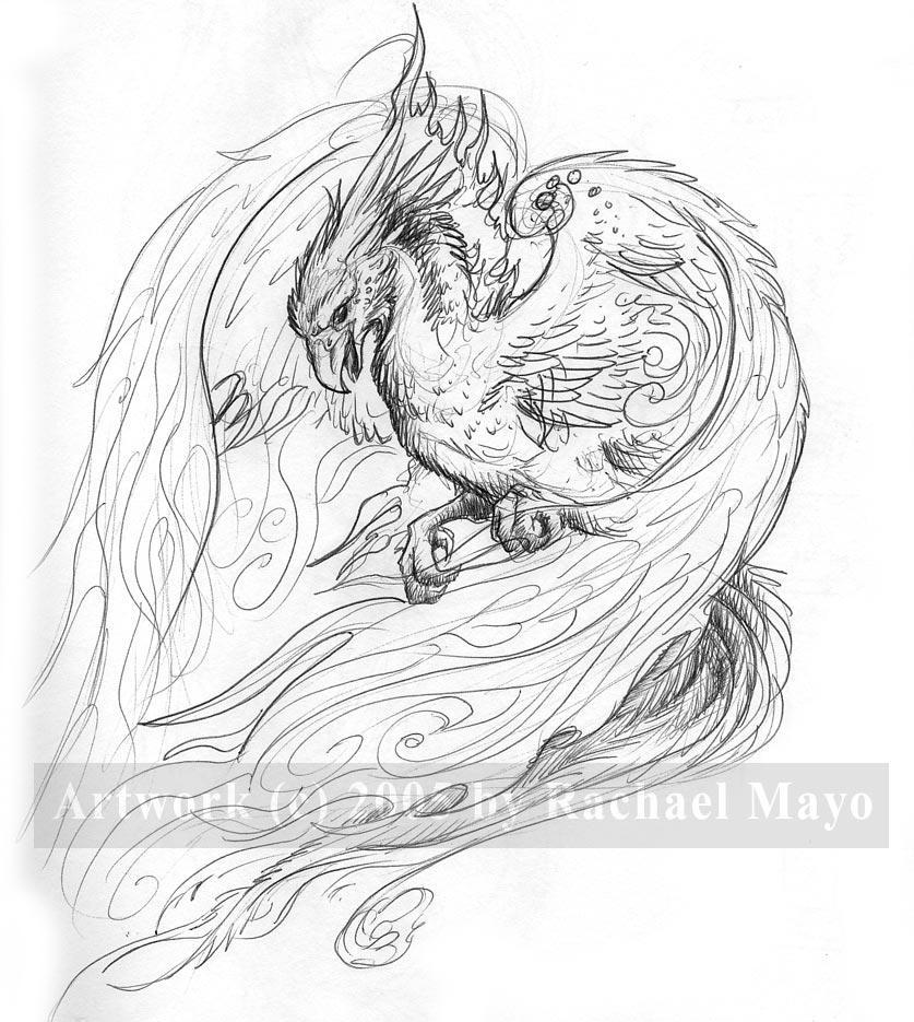 Whitefire Phoenix Sketch By Rachaelm5 On DeviantArt