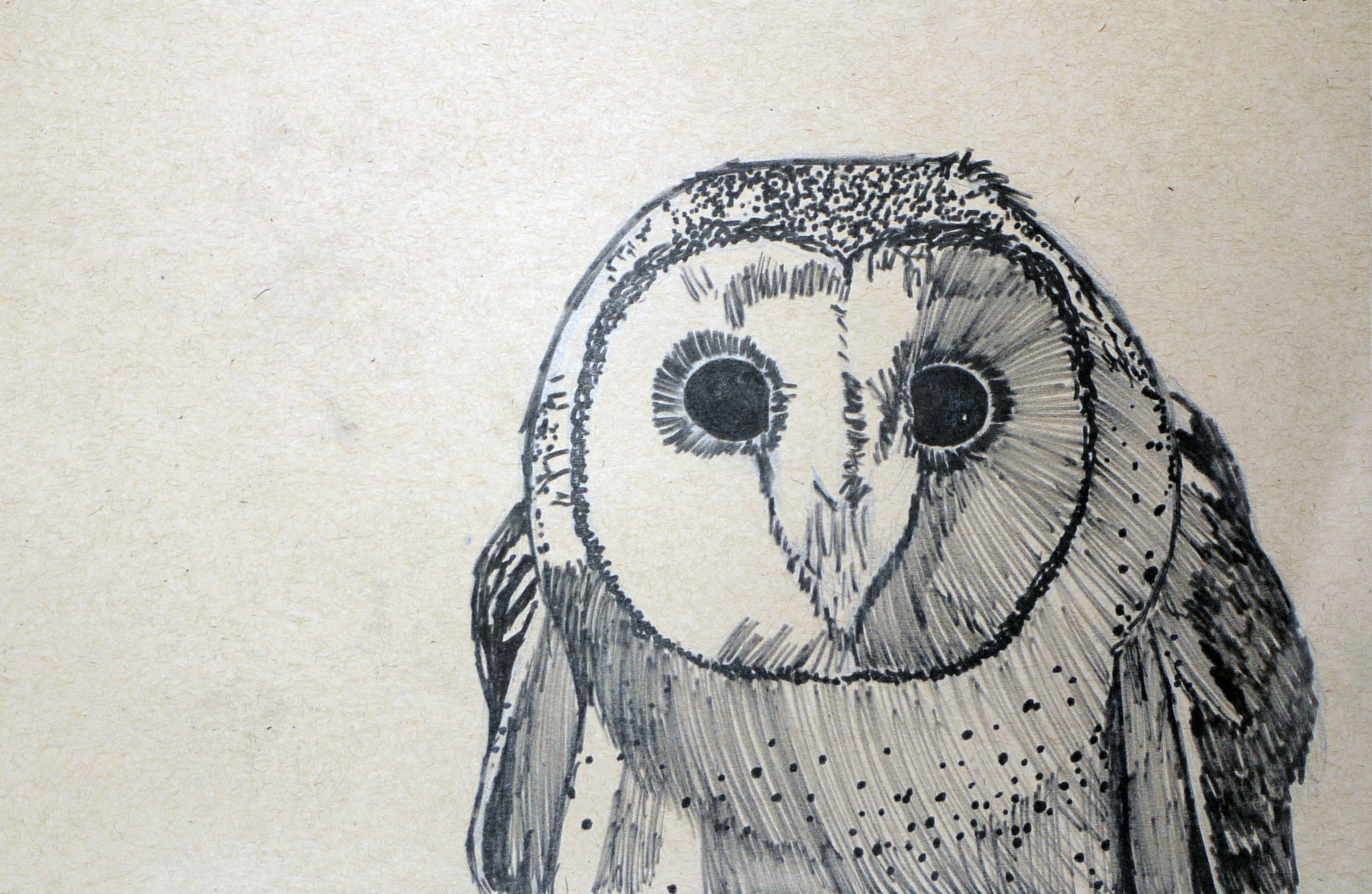 Masked owl drawing by marchio08 on deviantart for Cool drawings of owls