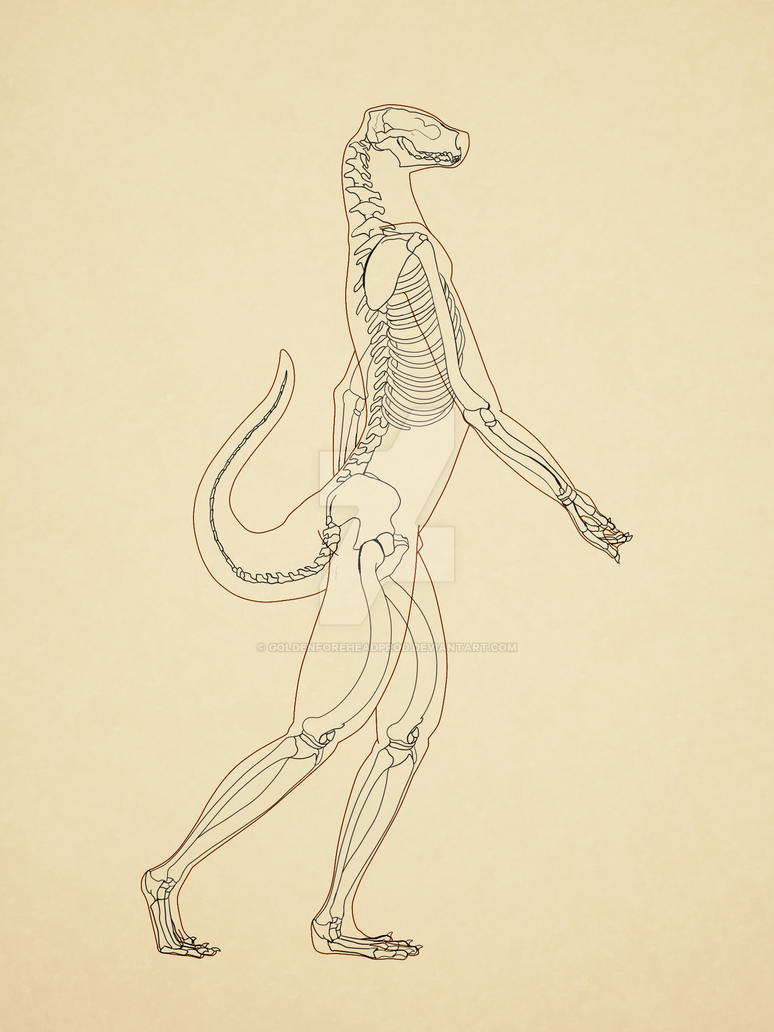 Fantastisch Seeotter Anatomie Fotos - Anatomie Ideen - finotti.info