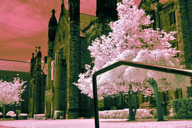 University and trees (infrared) by BossGettys