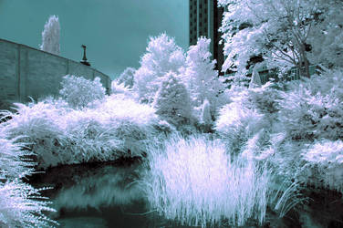 urban park (infrared) by BossGettys