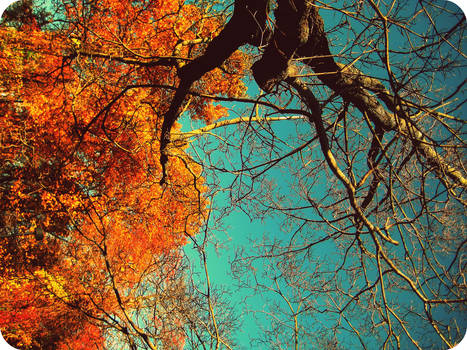 autumn from a tree trunk