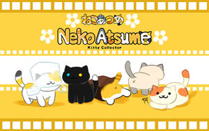 Neko Atsume by kiruru2592