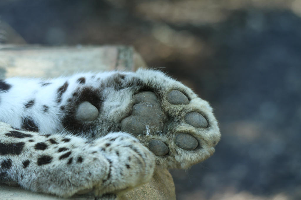 Big Cats With Claws And Paws
