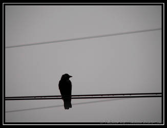 On the wires by TheBobson