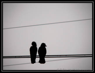 Couple on the wires by TheBobson