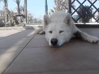A sleepy dog...zzzzzz by Eleni-youpiii