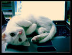 cat on the desk