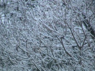 snowy trees by Tiyger