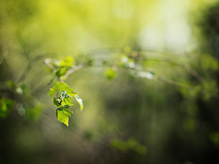 Elwen grove by Lumpy2