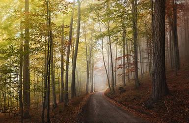 Autumn journeys III by Lumpy2