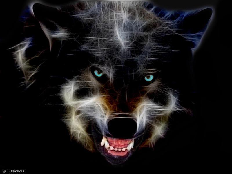 Wolf by Schiller1971