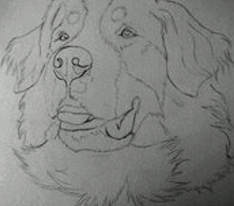 Bernese Mountain Dog Animation By Icantthinkofaname-09 On