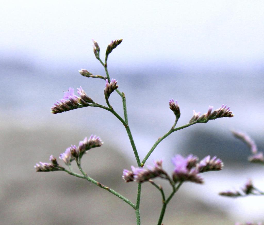 flowers by Selena890