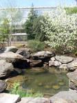 Indoor Pond 1
