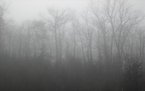 Mist and Fog 1