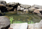 Little Pond and Stones--Pre-Cut
