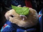Totoro Hamster