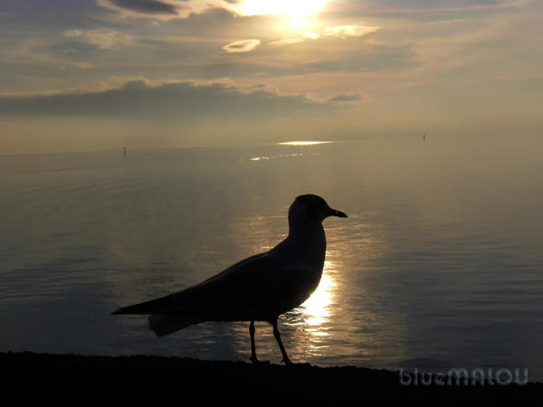 Seagull on calm sea by blueMALOU
