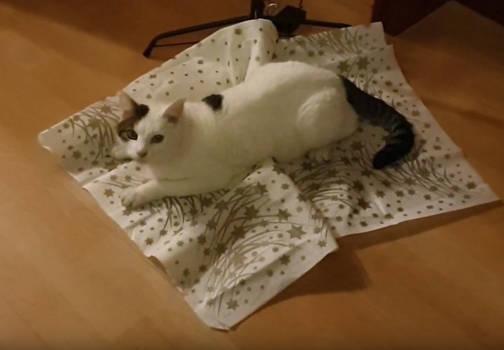 White Cat Mizzi