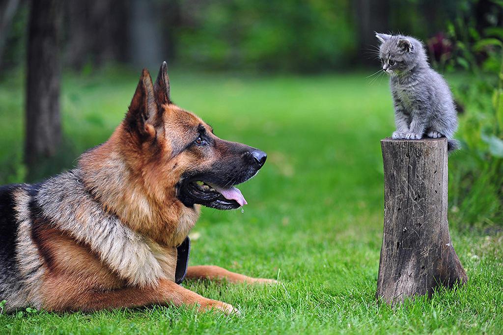 Kitten and Shepherd by Egor412112