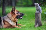Kitten and Shepherd