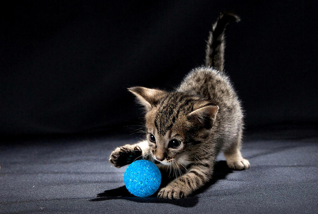 Playing kitten. by Egor412112