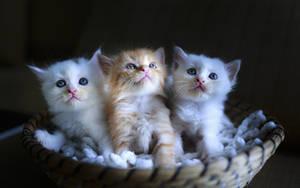 Three fluffy lumps by Egor412112