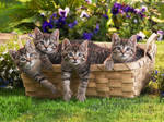 Basket with kittens
