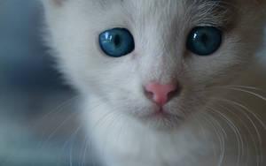 Blue eyes. by Egor412112