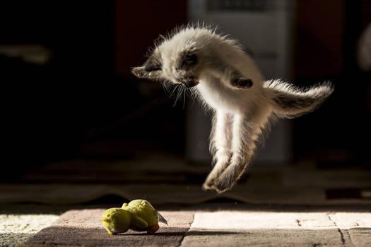 Enthusiastic jump.