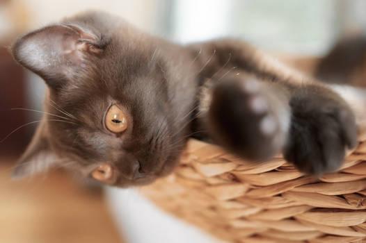 Black kitten in the basket.