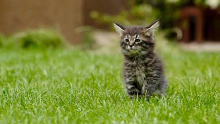 A kitten on the green grass.