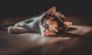 Lying on the floor.
