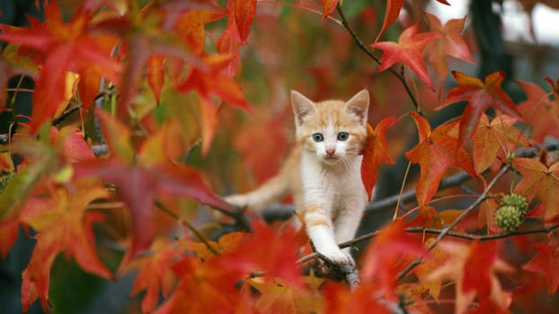 The autumn kitten.