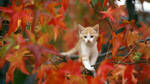 The autumn kitten. by Egor412112