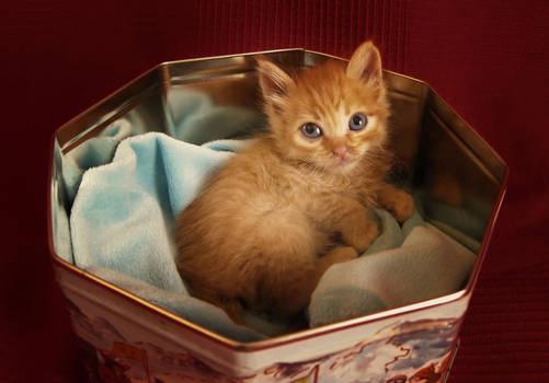 A gift kitten.