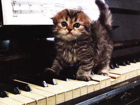 Piano maestro.