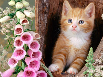 A kitten and flowers.