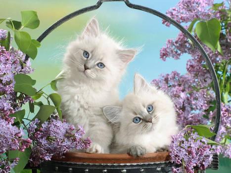 Kittens in a wicker basket.