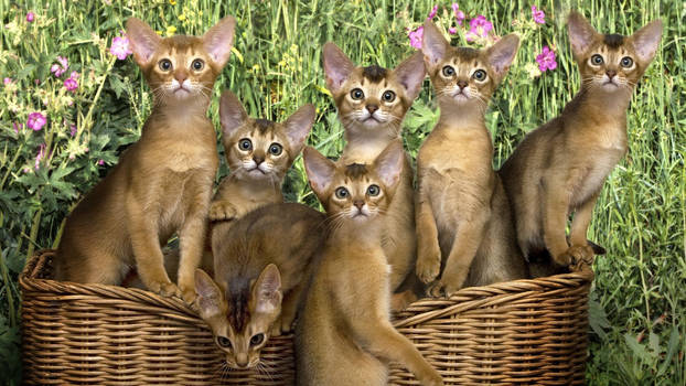 The cat family.