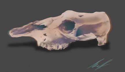 Skull Study 1 by JaMmanfre