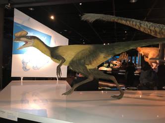 AMNH Proceratosaurus
